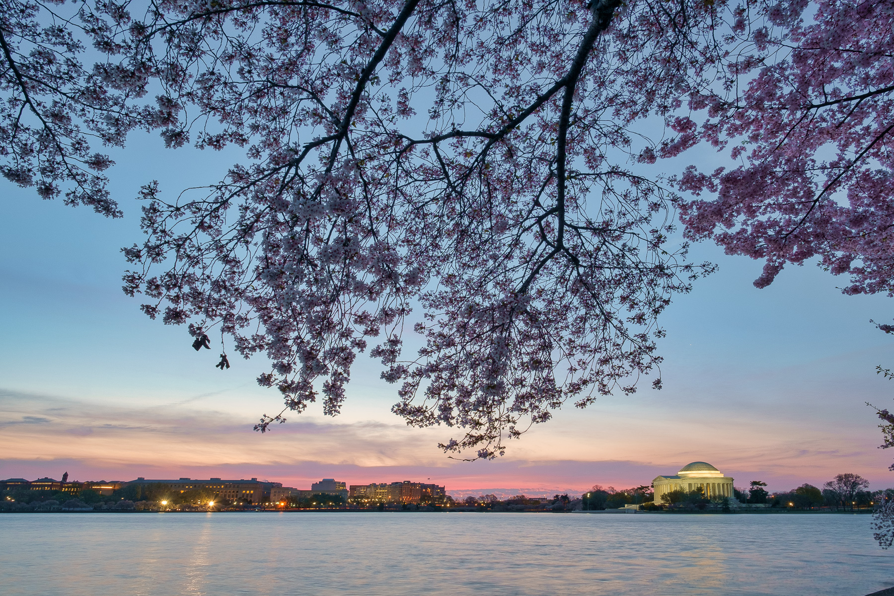 Cherry-Blossoms-At-Sunrise-Washington-DC.jpg
