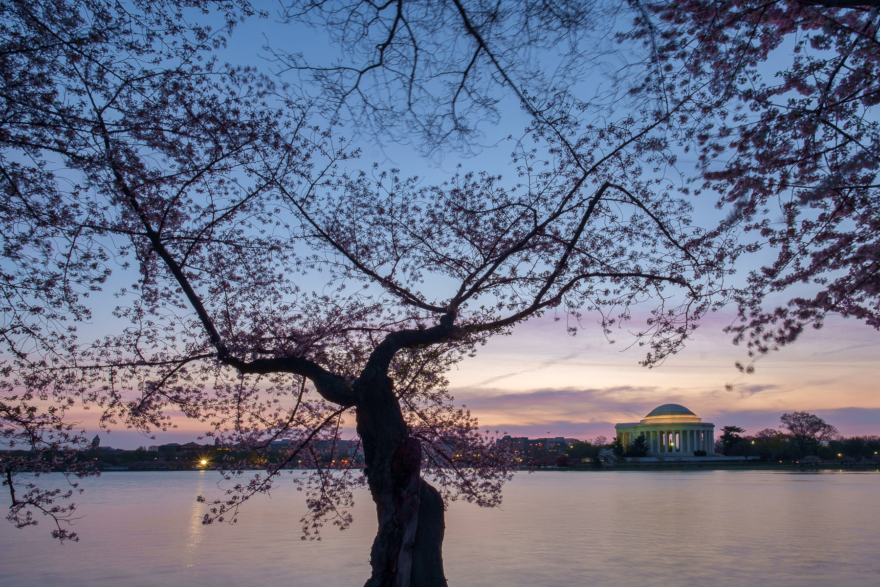 Cherry-Blossom-Festival-Tidal-Basin.jpg