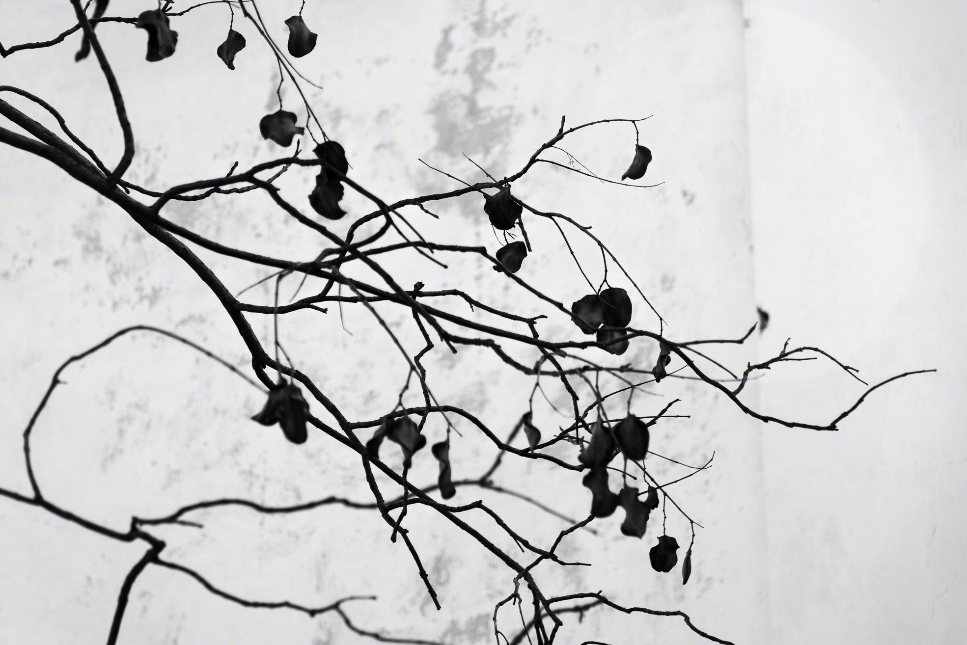 Ramas - Branches.jpg