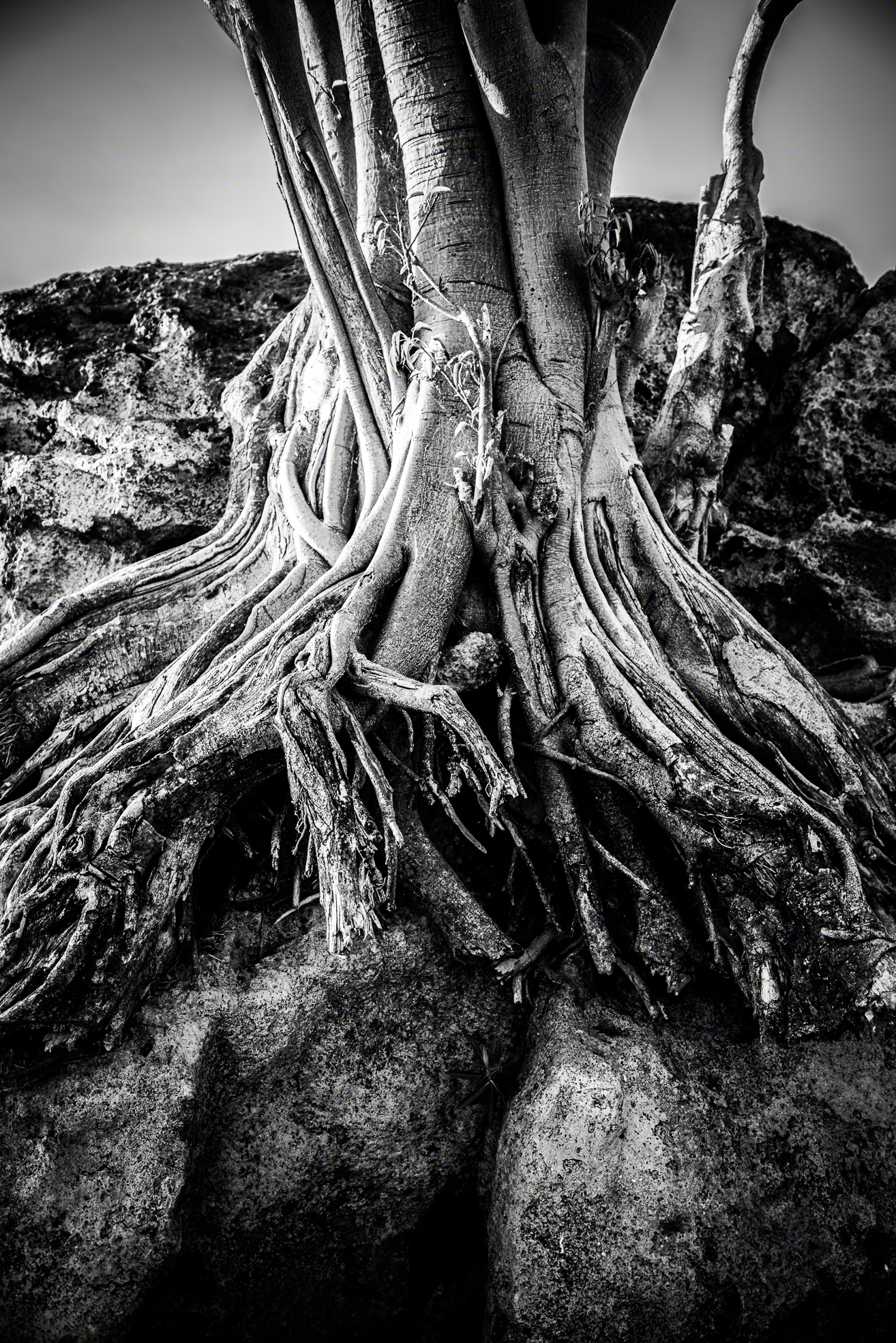 Tree In The Rock 1.jpg