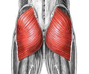 """The gluteus maximum (GM) is the primary """"mover"""" of the hip."""
