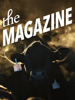 The cow says  Moogazine .
