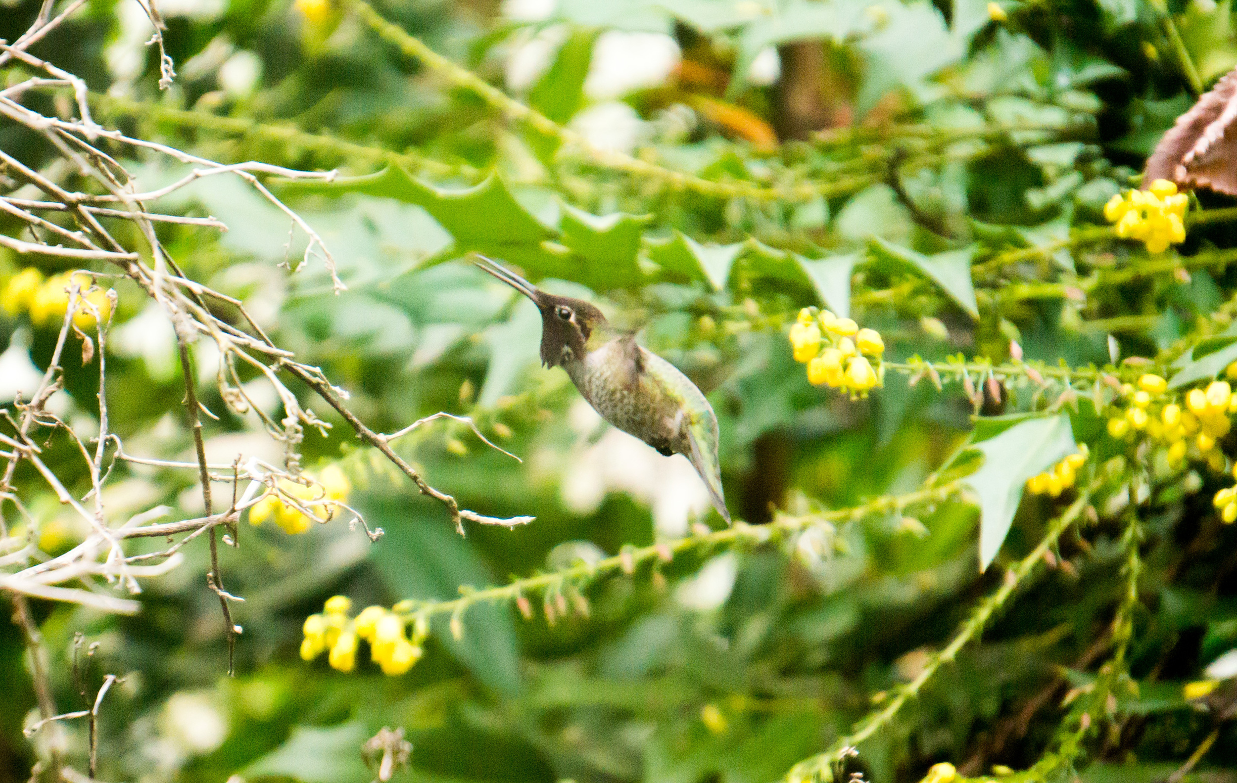 A hummingbird in our backyard; a fitting image for how fast 2015 went and how hard I remember working.