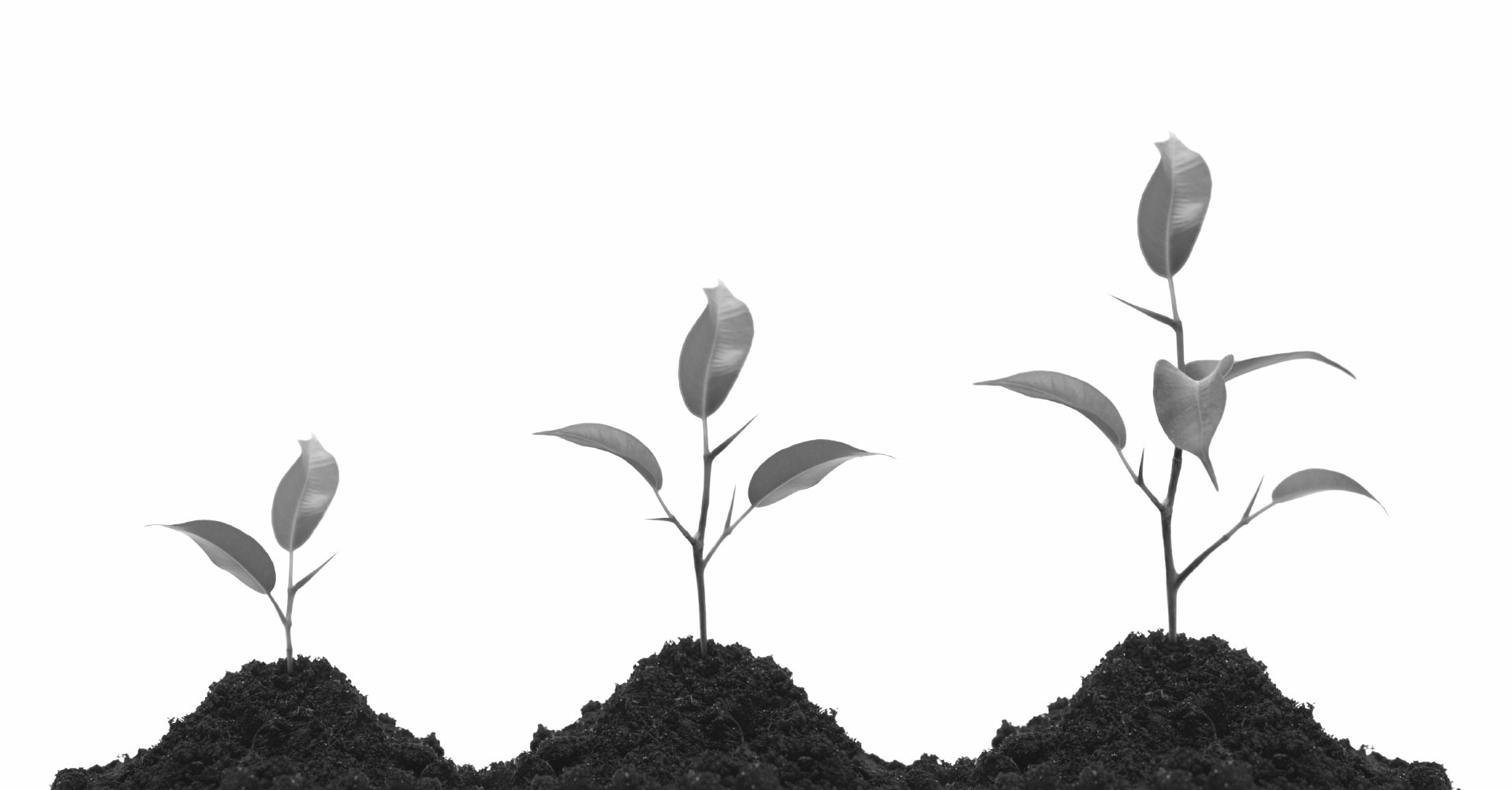 Améliorer les soins   Une vision d'entreprise qui ne date pas d'hier    En savoir plus