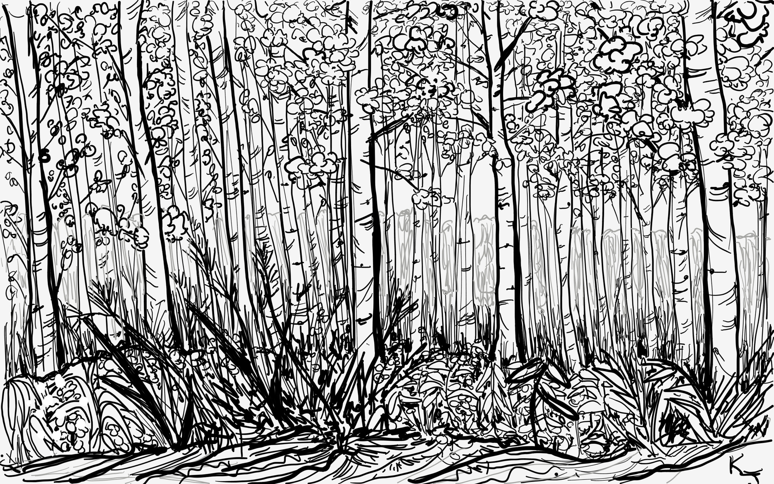 My first drawing here- the beech trees from down the street