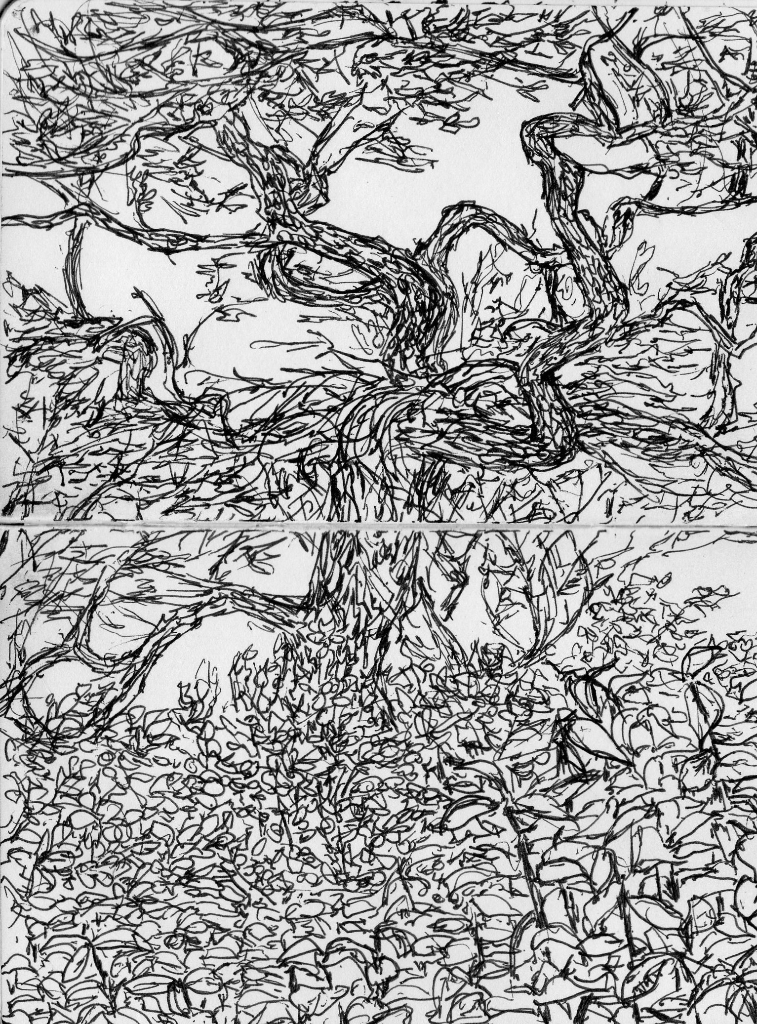 provincetown drawing tree