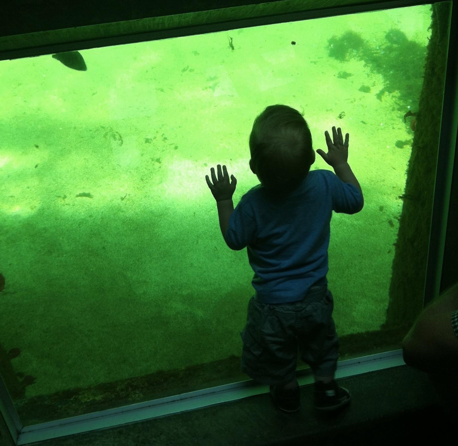 7.11 aquariam H.JPG