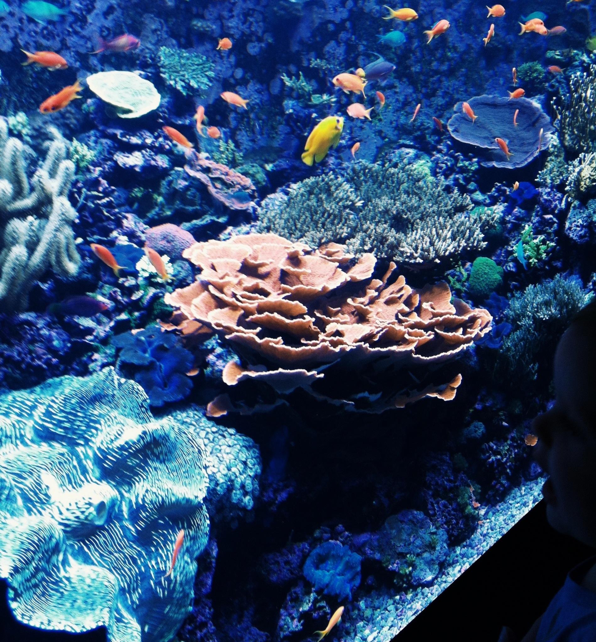 7.11 aquariam2.JPG
