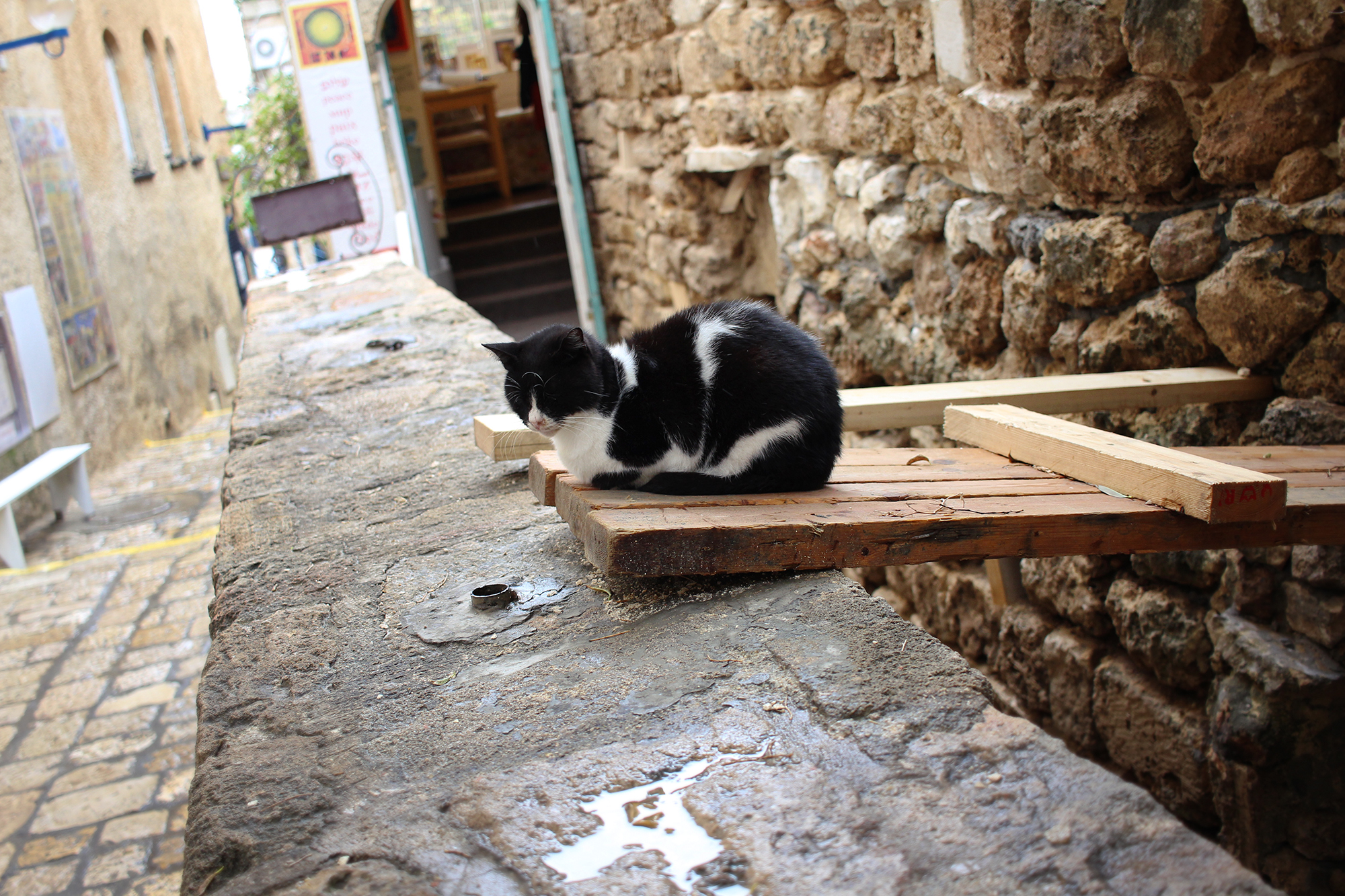 A restful cat in the alley of Old Jaffa's artist district, Tel-Aviv, Israel. Photography by Geena Matuson @geenamatuson #thegirlmirage.