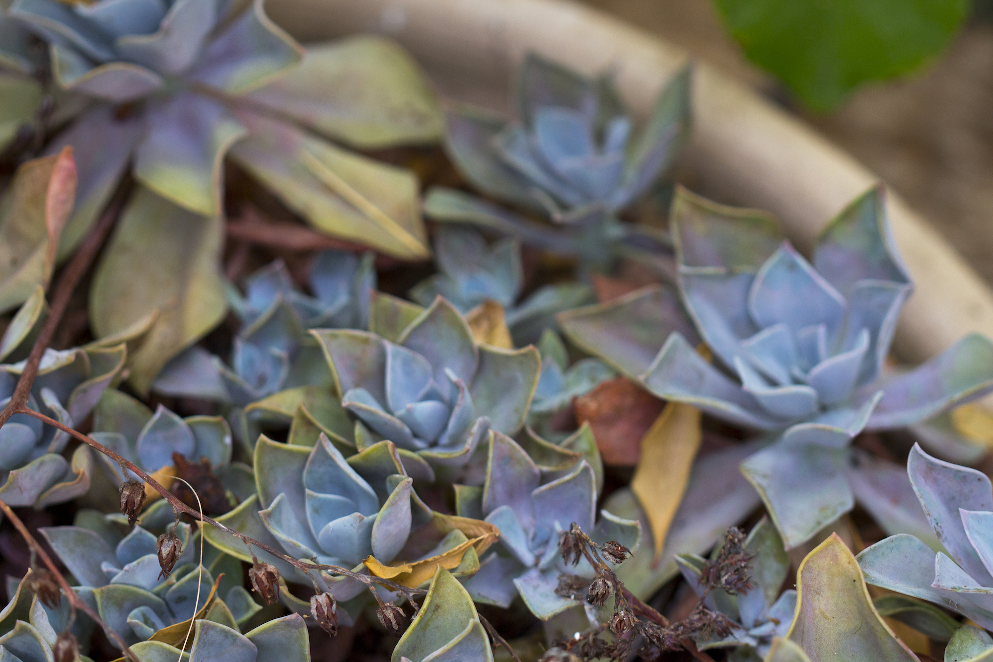 Succulents and #garden photography by Geena Matuson @geenamatuson #thegirlmirage.
