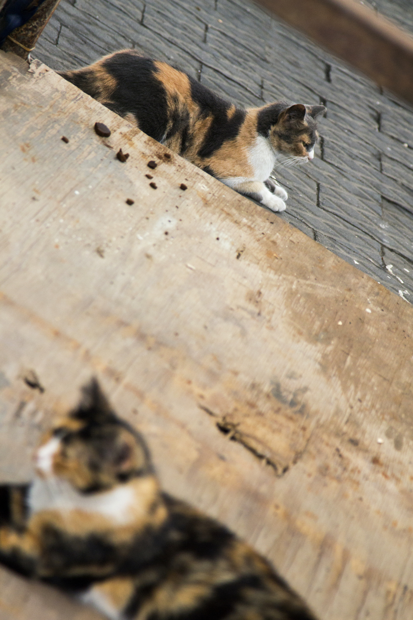 Cats on the pier at Old Jaffa in Tel Aviv, Israel. #Travel photography by Geena Matuson @geenamatuson #thegirlmirage.