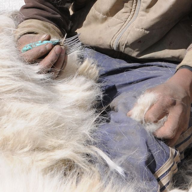 Combing the wool