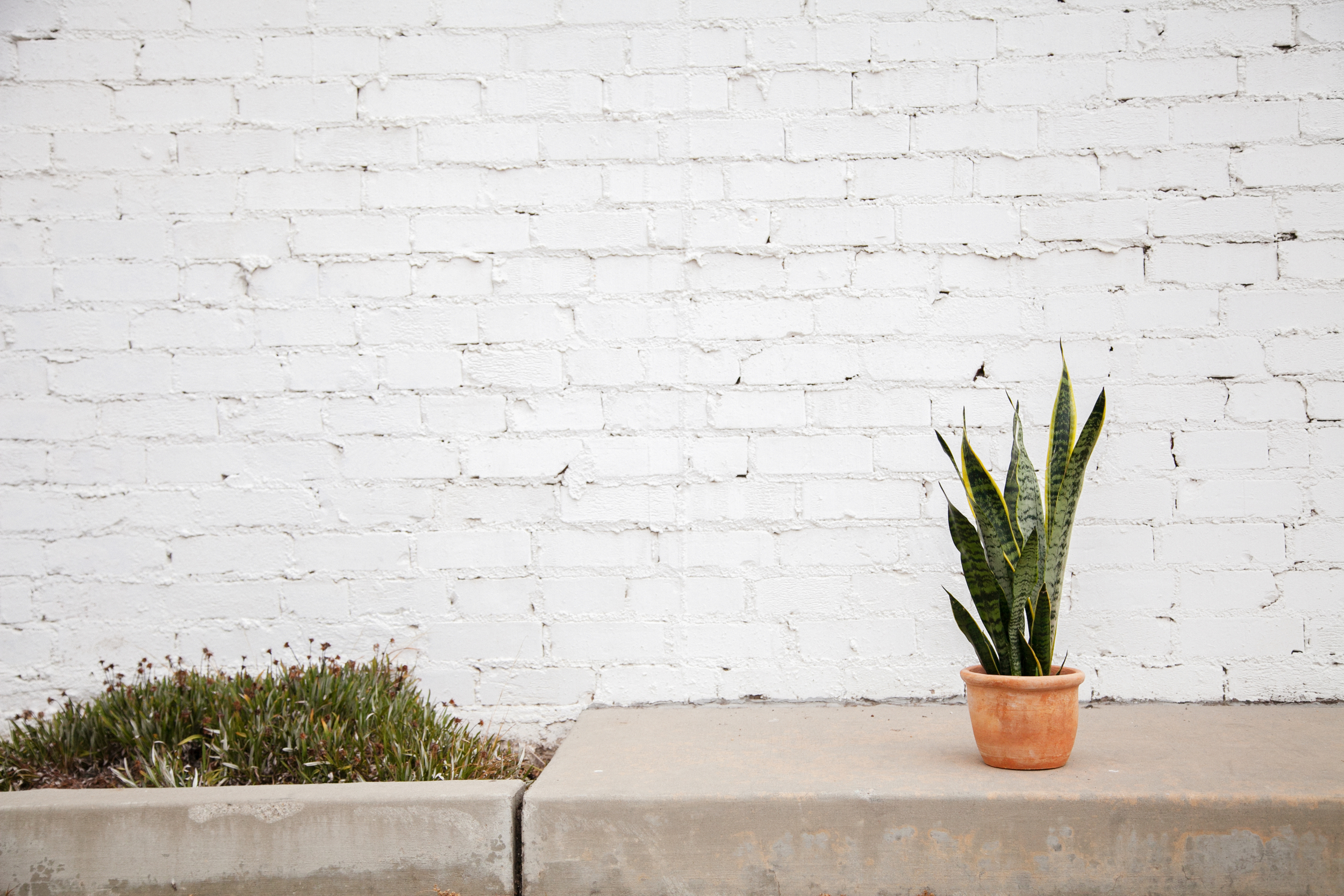amy hobans plant