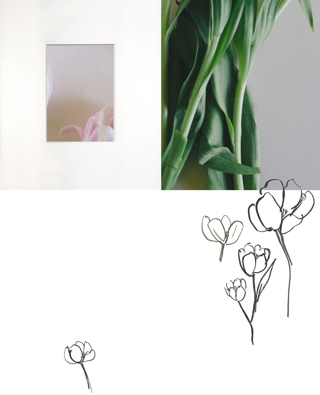 Tulip floral study by Naomi Yamada