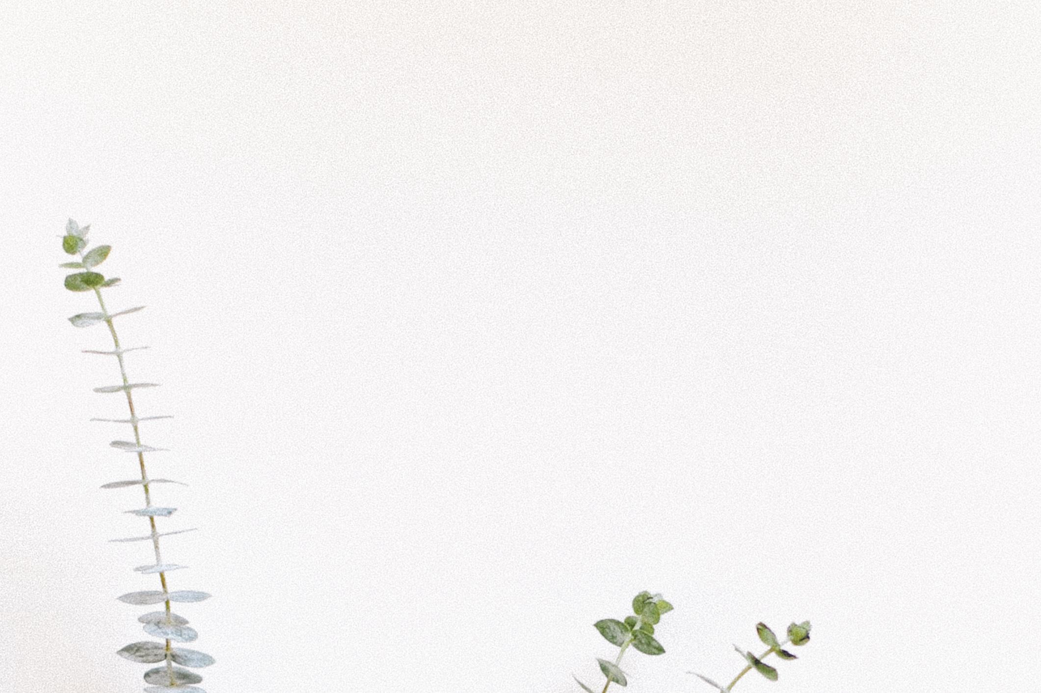 Eucalyptus detail by Naomi Yamada