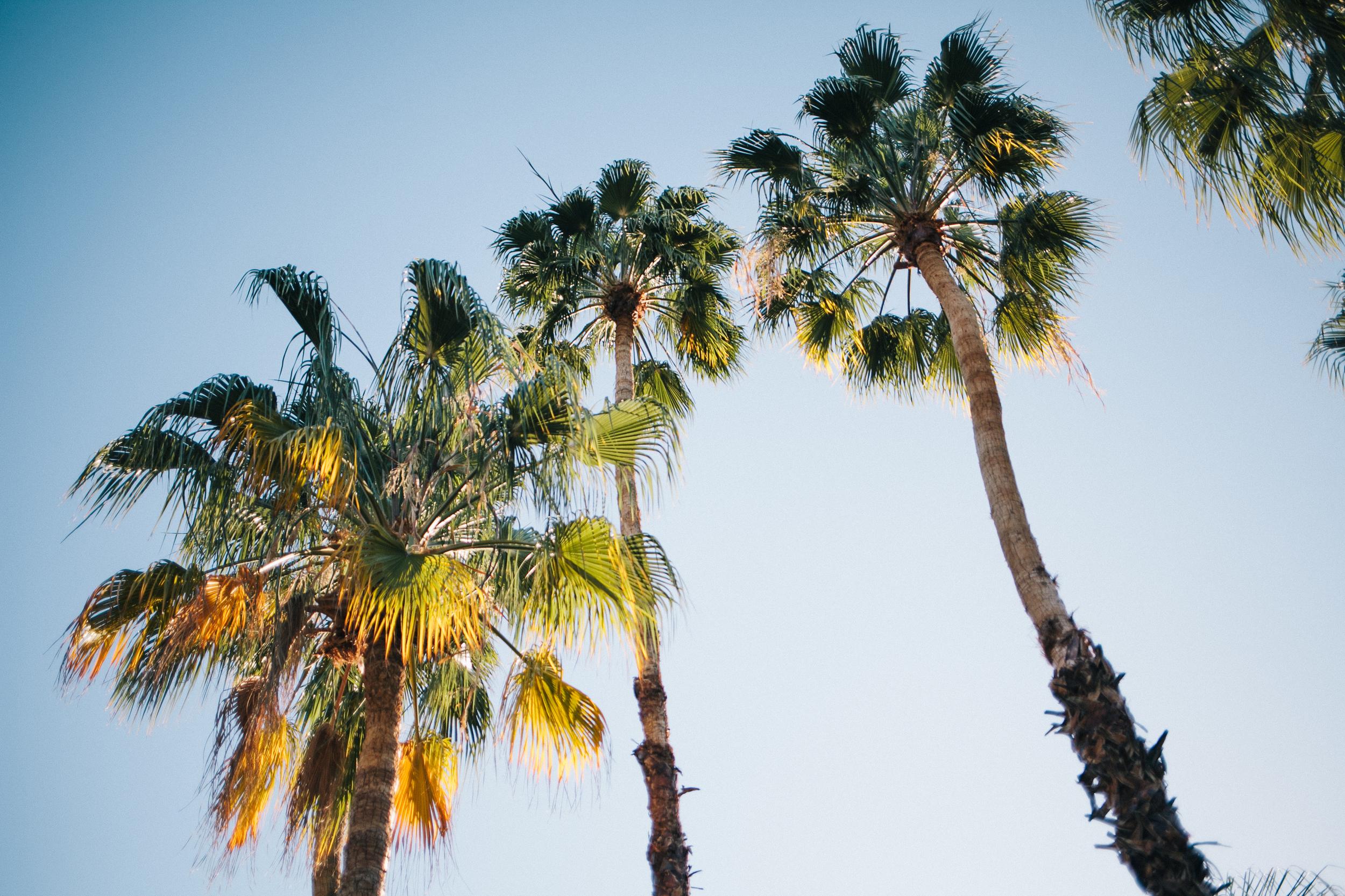 Palm Springs Tress by Naomi Yamada