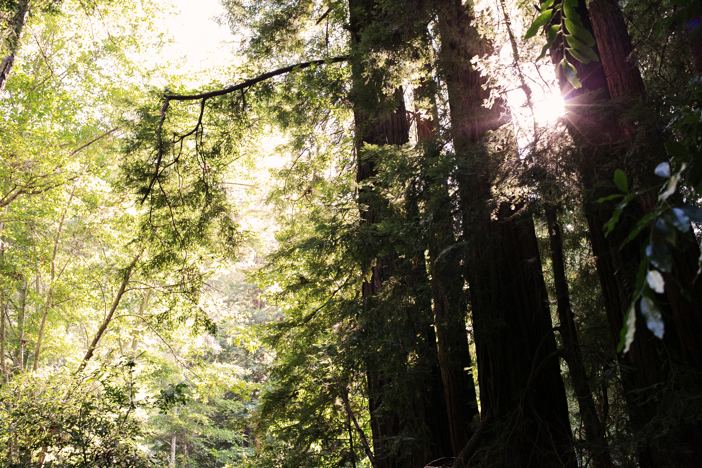 Big_Sur_Tree_Grove_by_Naomi_Yamada-1.jpg