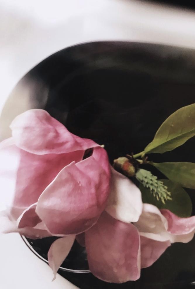 Magnolia in black vintage vase