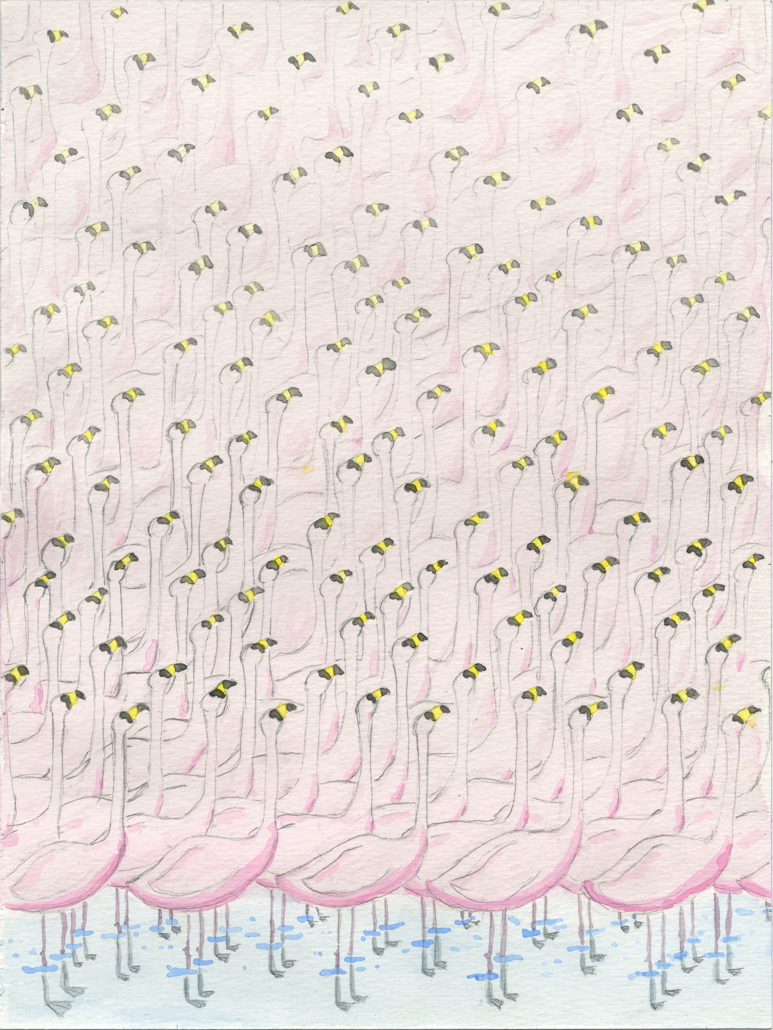 Flamingos, 2014 watercolor on paper
