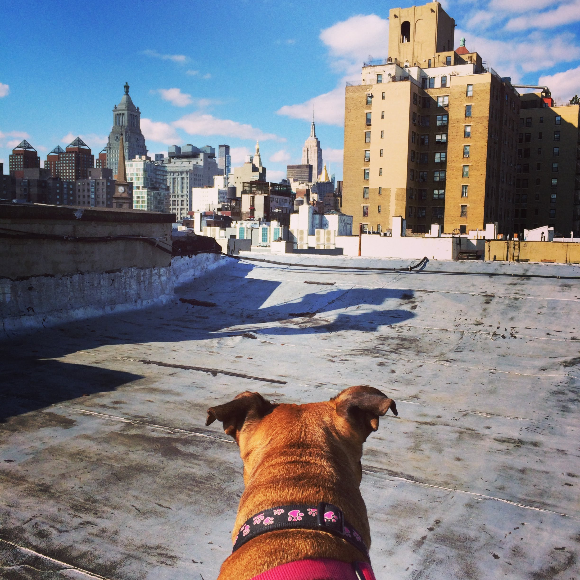 - When my two roommates and I moved to our East Village, six-floor walkup in 2012, Ego had five beautiful years to just admire the Manhattan skyline.