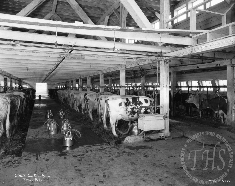 Interior of Consolidated Mining & Smelting Co. Ltd. barn, Warfield (Hughes) - 1928