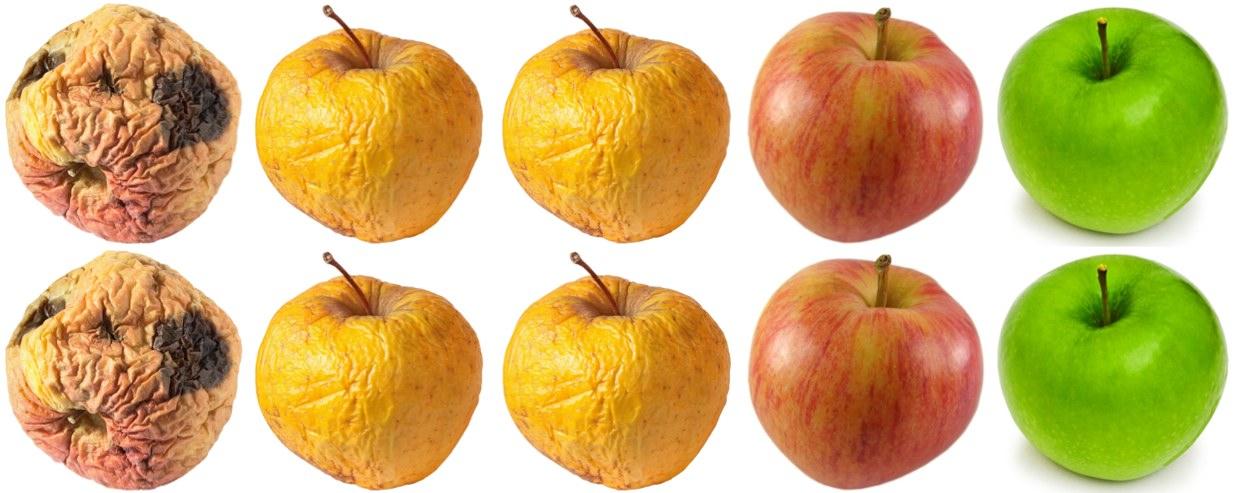 4x2 Apples in row.jpg