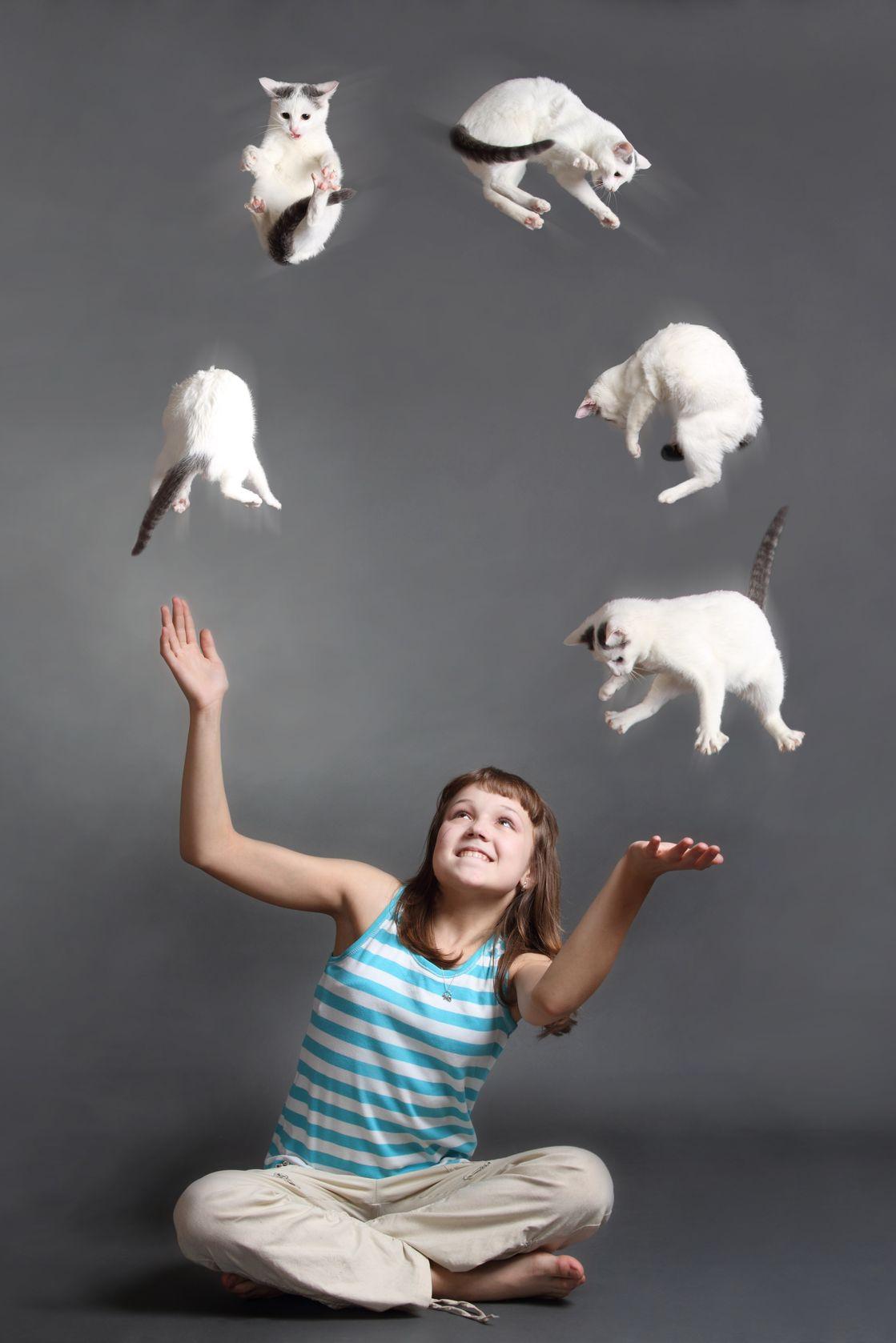 Juggling Cats 13334328_ml.jpg