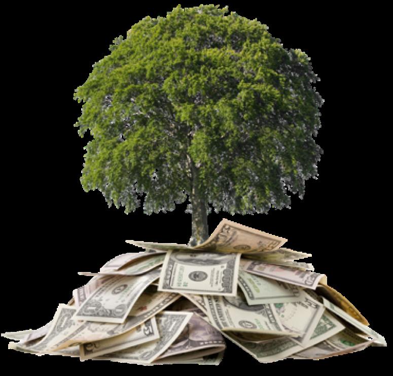 develop money tree.png