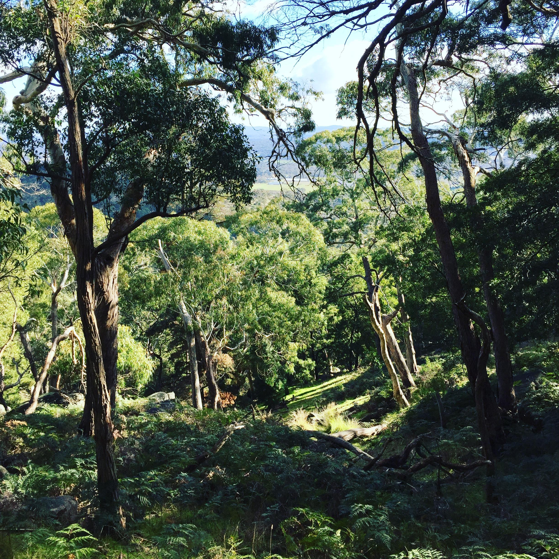Mount Alexander