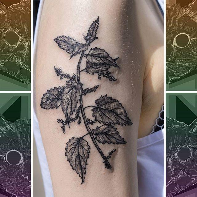 Stingy stingy. Not often we get to do work like this, but nettles need love too! Came out reaal nice though. By @sooztattoo  #owlcat #owlcattatto #tattoo #tattoos #tattooworkers #tattooartist #tattoosofinstagram #uktta #aberdeen #aberdeencity #scotland #fun #art #ink #tatmaps #bestofbritishtattoo #sonya7 #seeninthedeen #tattooist #artist #solidink #granitecity #nettletattoo #flowertattoo #weedtattoo #blackwork