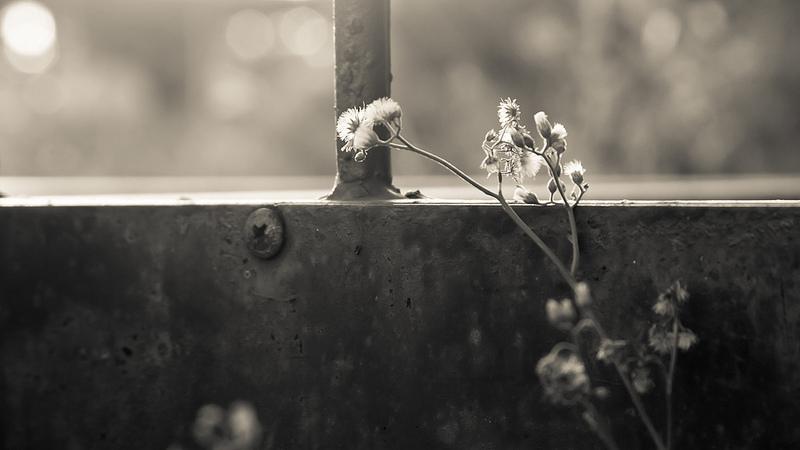 © Huy Ngo