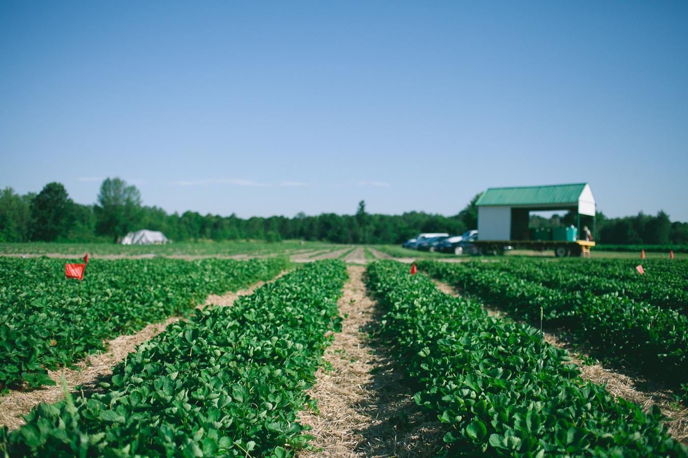 Berry-Picking-Ottawa-Shouldice_5662.JPG