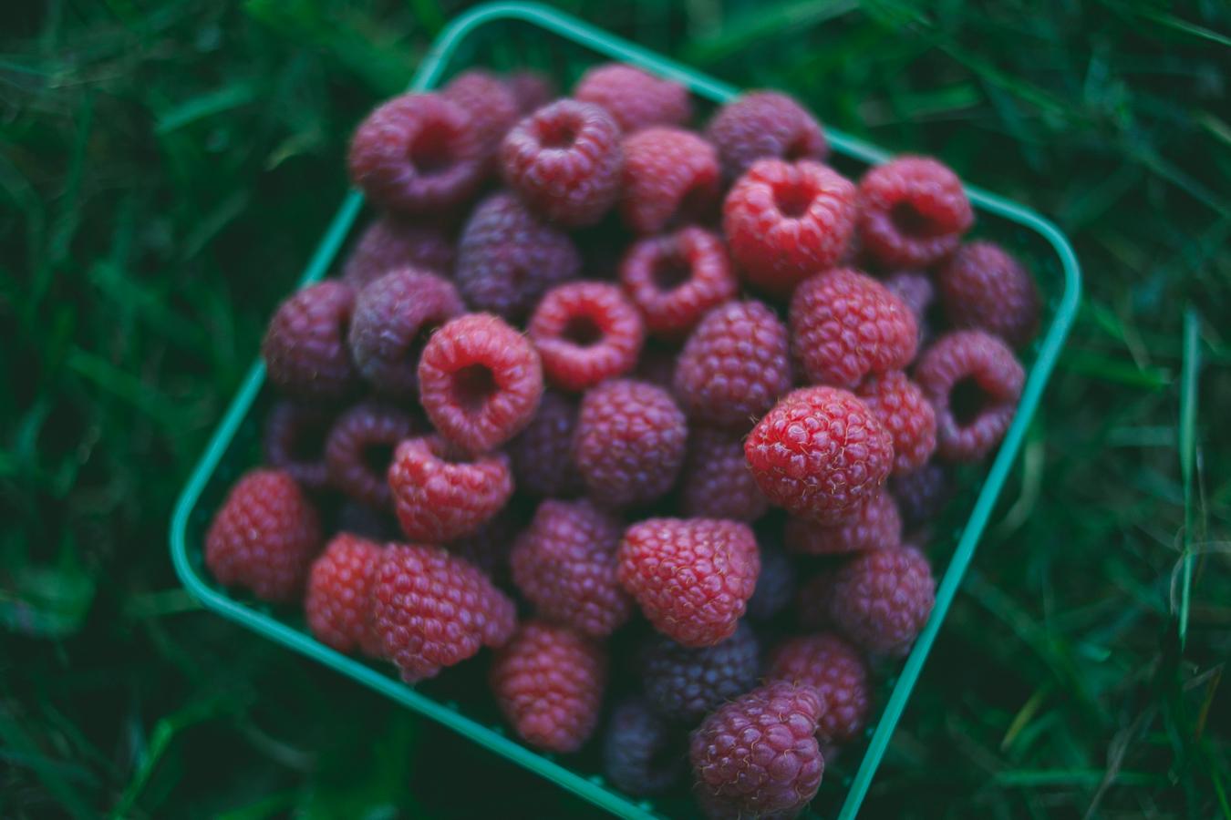 Berry-Picking-Ottawa-Shouldice_5695.JPG