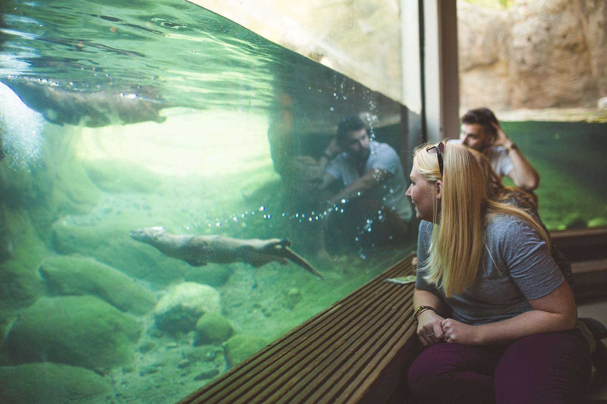 Seattle-zoo-otter-pool
