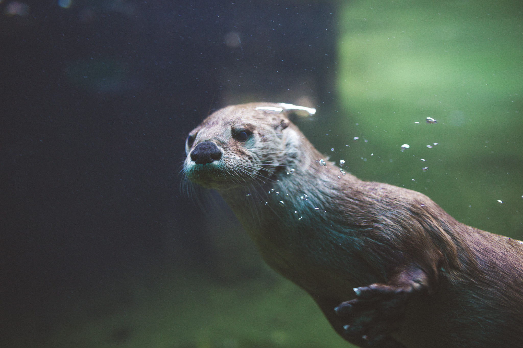 Seattle-zoo-otter