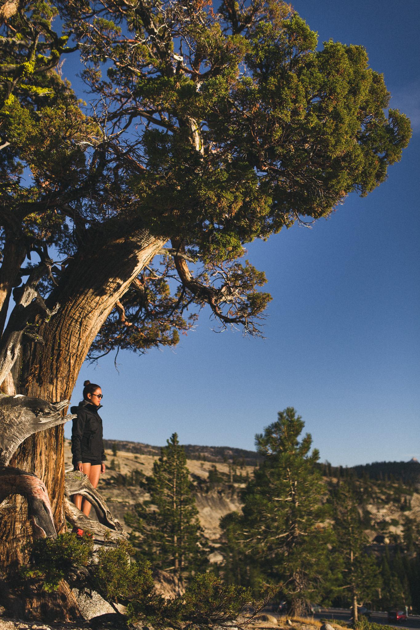 Yosemite-Tree-Portrait