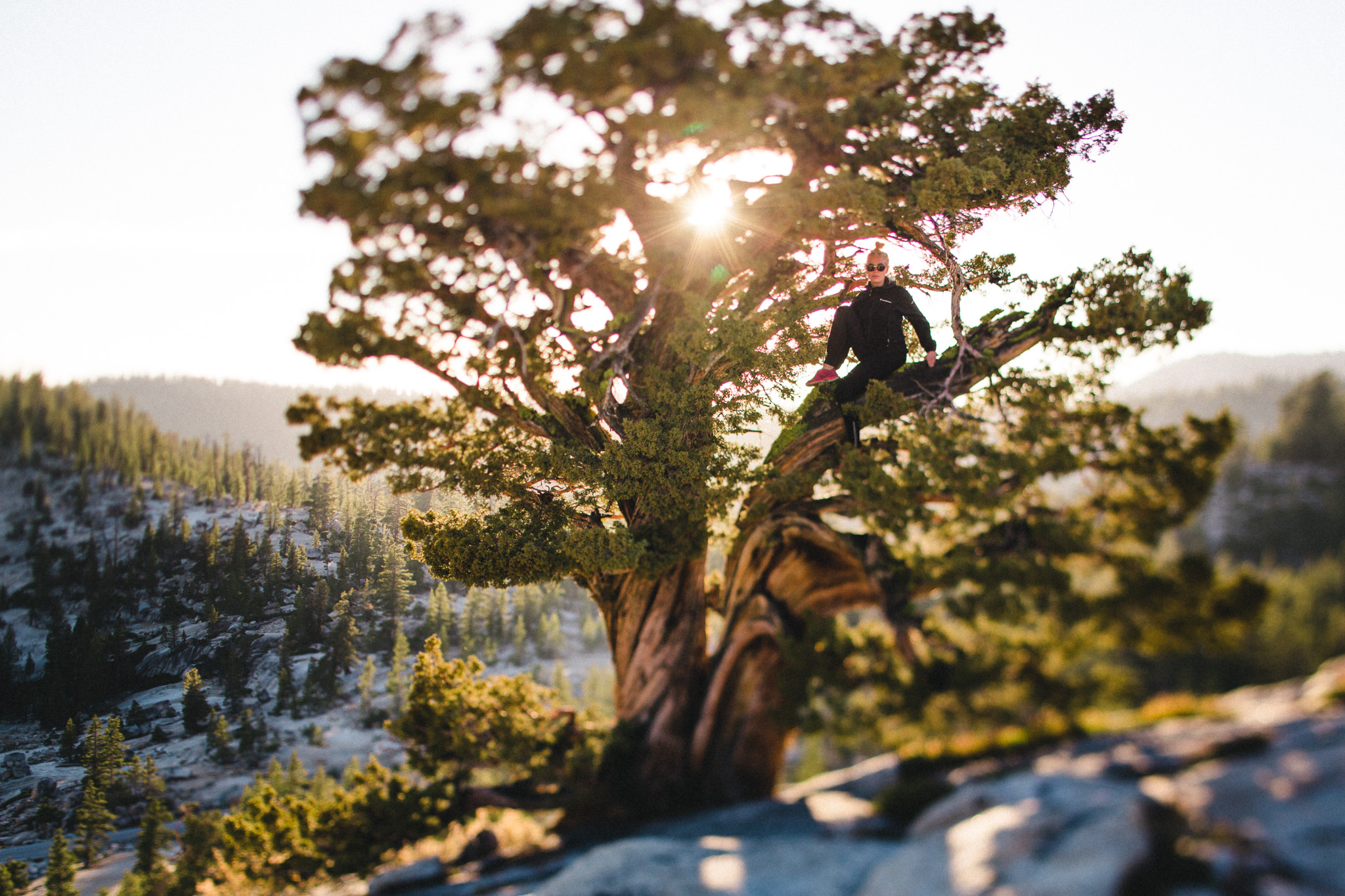 Girl-sitting-in-a-tree-backlit