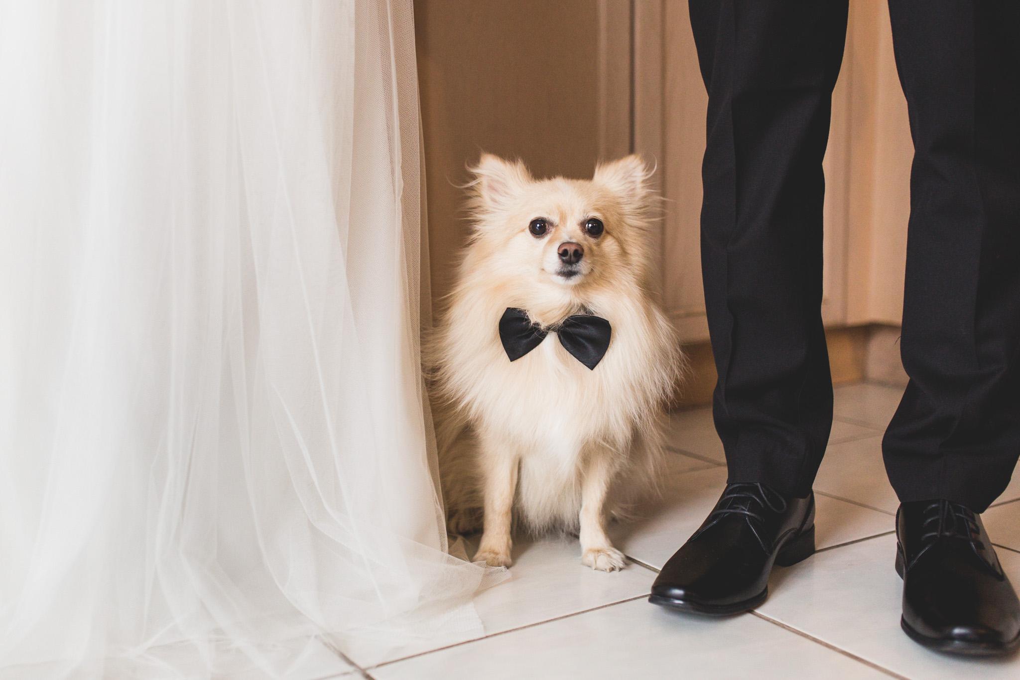 dog-with-wedding-bowtie