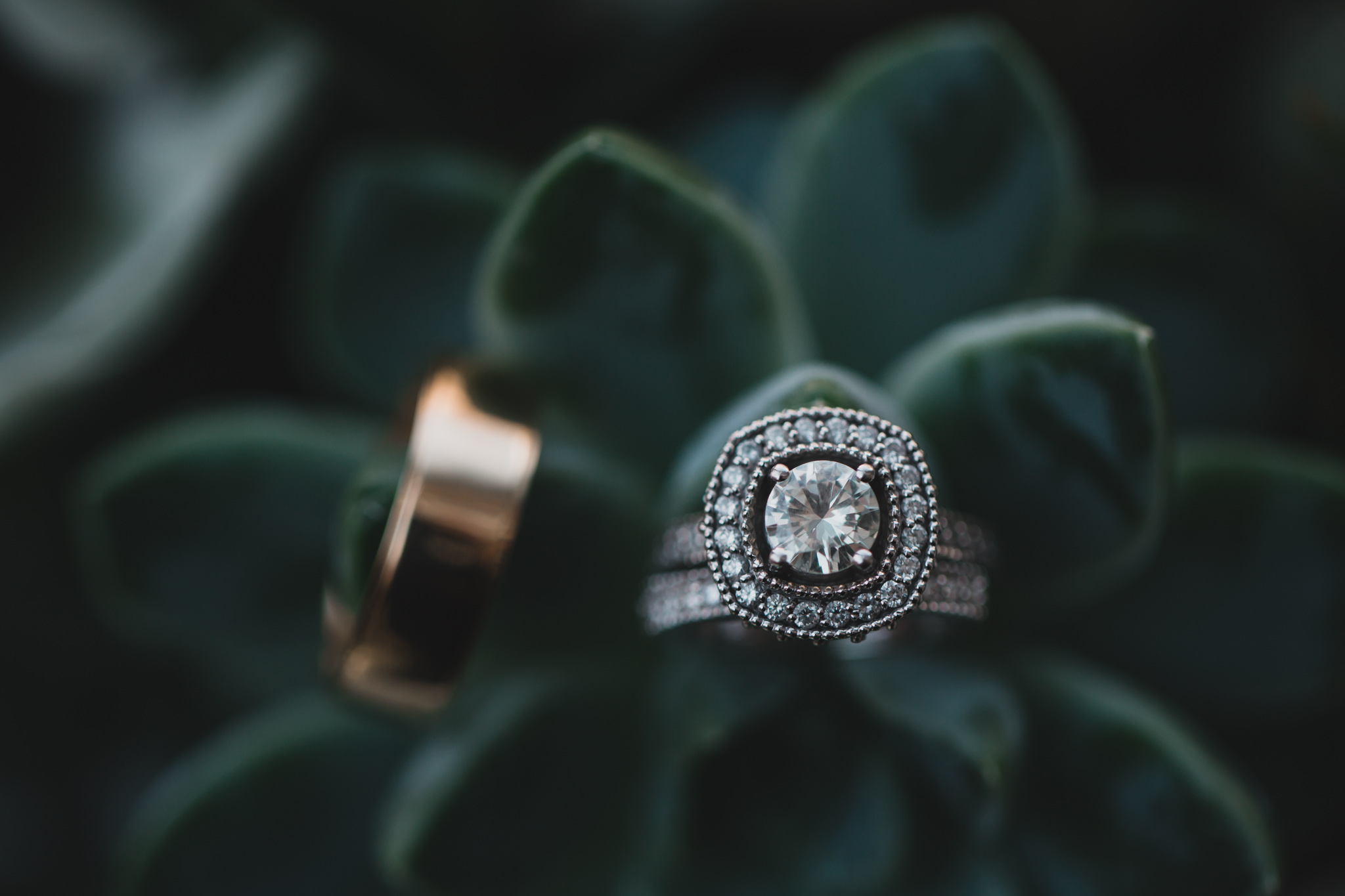 Wedding rings on a succulent