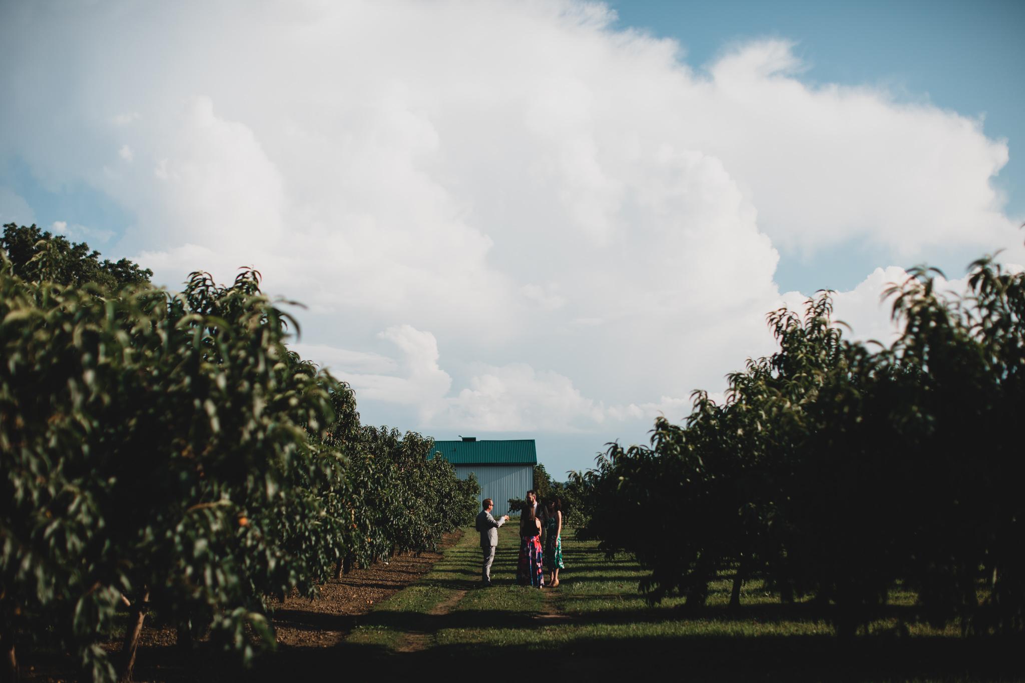 Backyard Orchard Wedding, Niagara on the Lake
