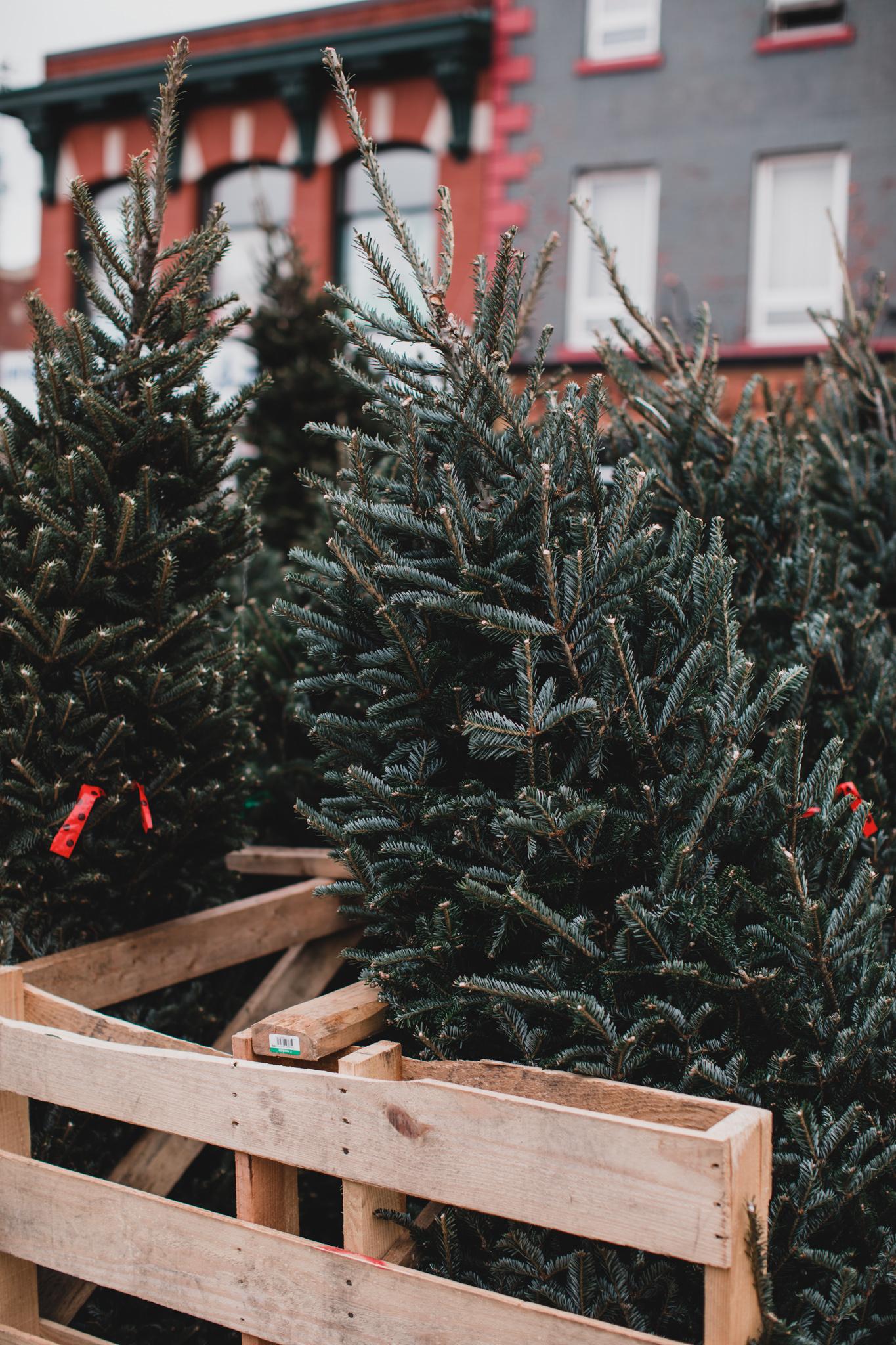 Byward Market Christmas tree