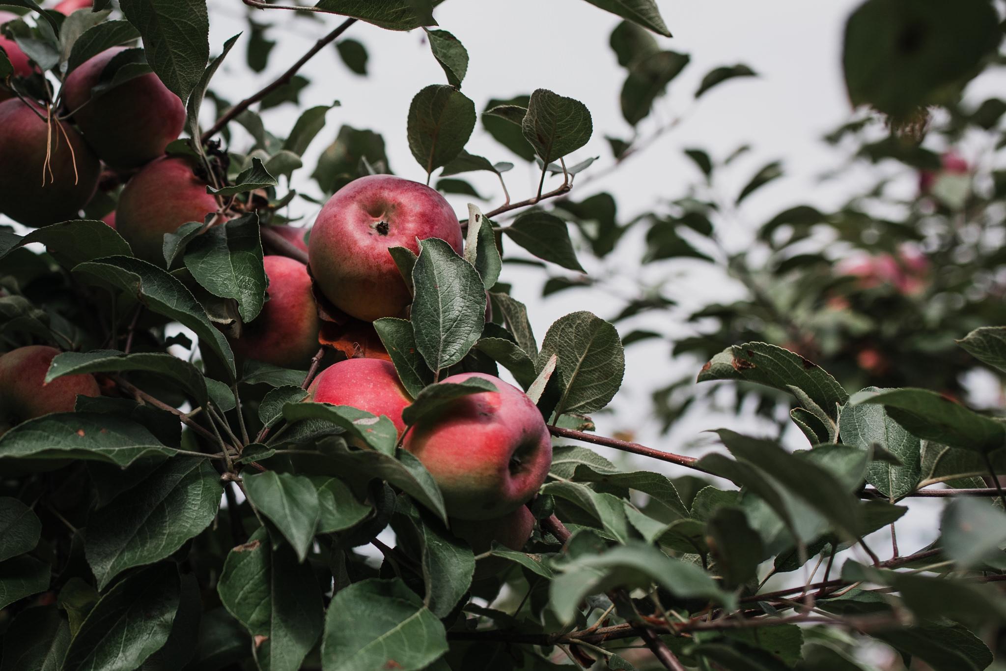 059-WEB-Jonathan-Kuhn-Photography-Elish-Nate-AppleOrchard-6760.jpg