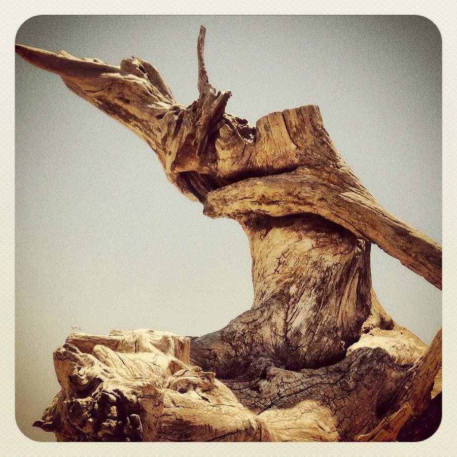 Driftwood, Tybee Island