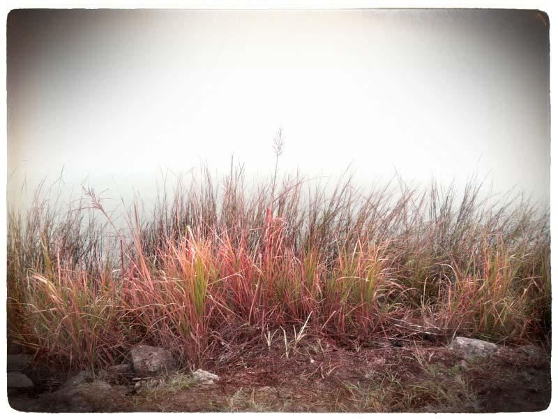Marsh and Fog