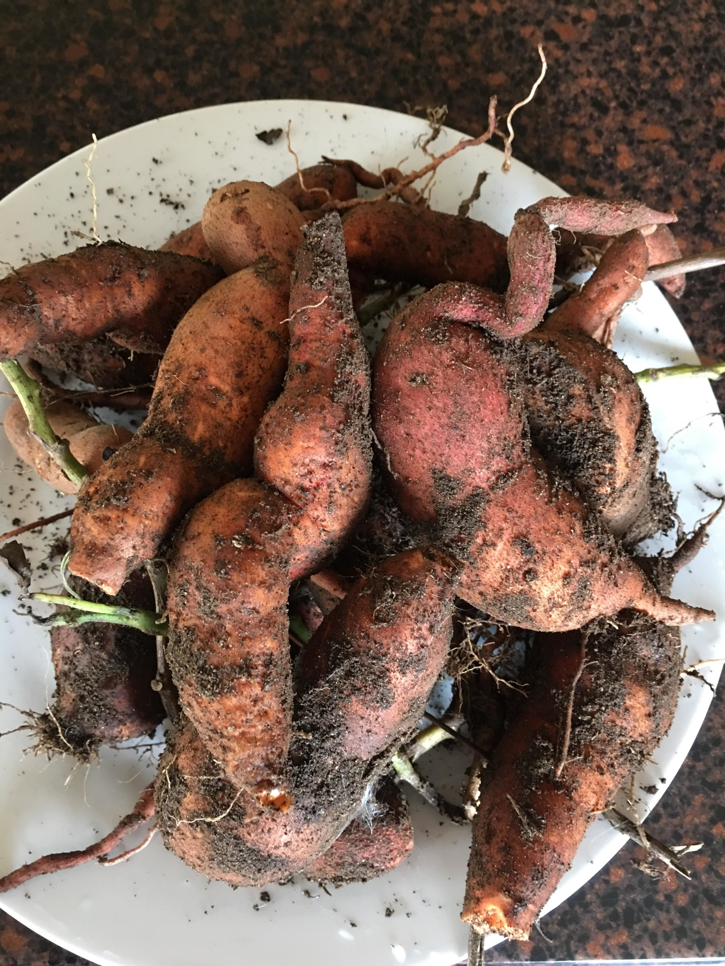 Sweet potatoes from our garden