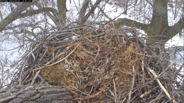 2-21-13 nest.png