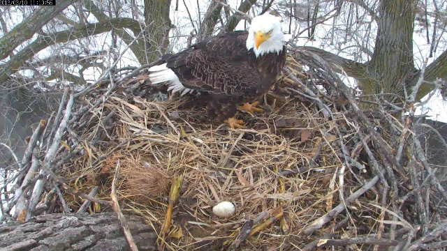 And a retro pic of the day from March 10th. Harmony's first day as an egg.