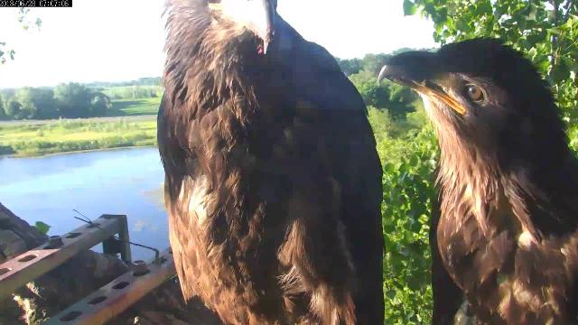 Ya know ,Peace, your beak is longer than mine! You may need a beak job later.