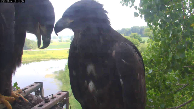 SO, after we fledge we play hide and seek with the cam, right??