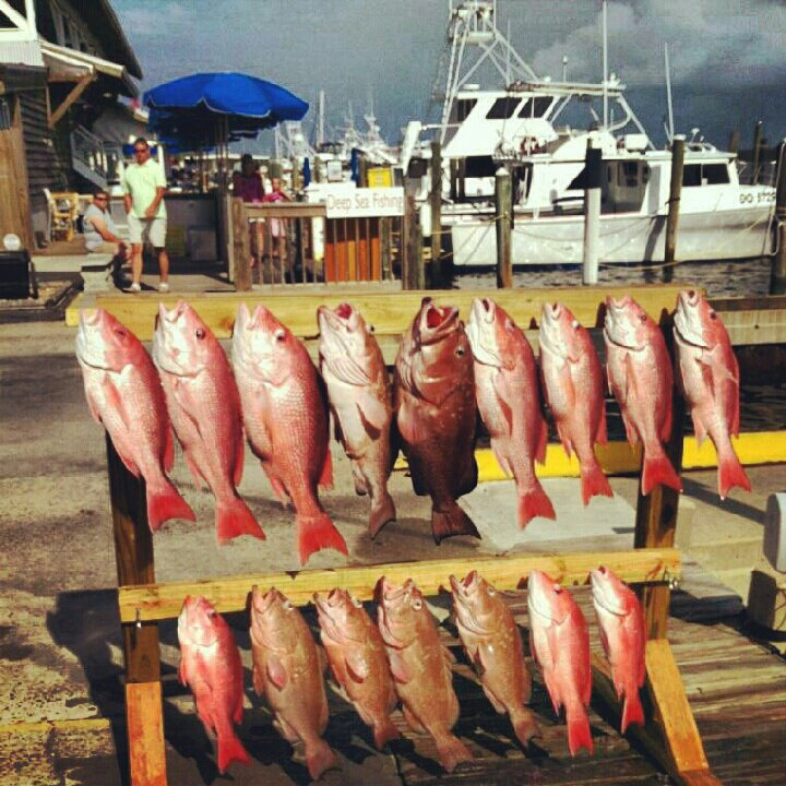 Blue-Water-Connection-Panama-City-Beach-Snapper-Fishing.jpg